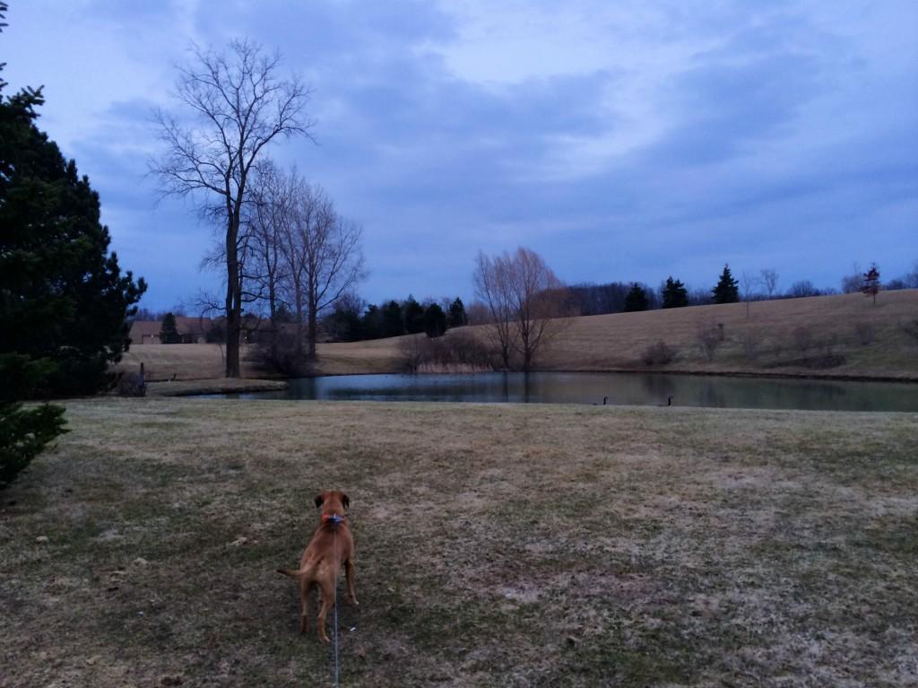 sunset run with roadie 5