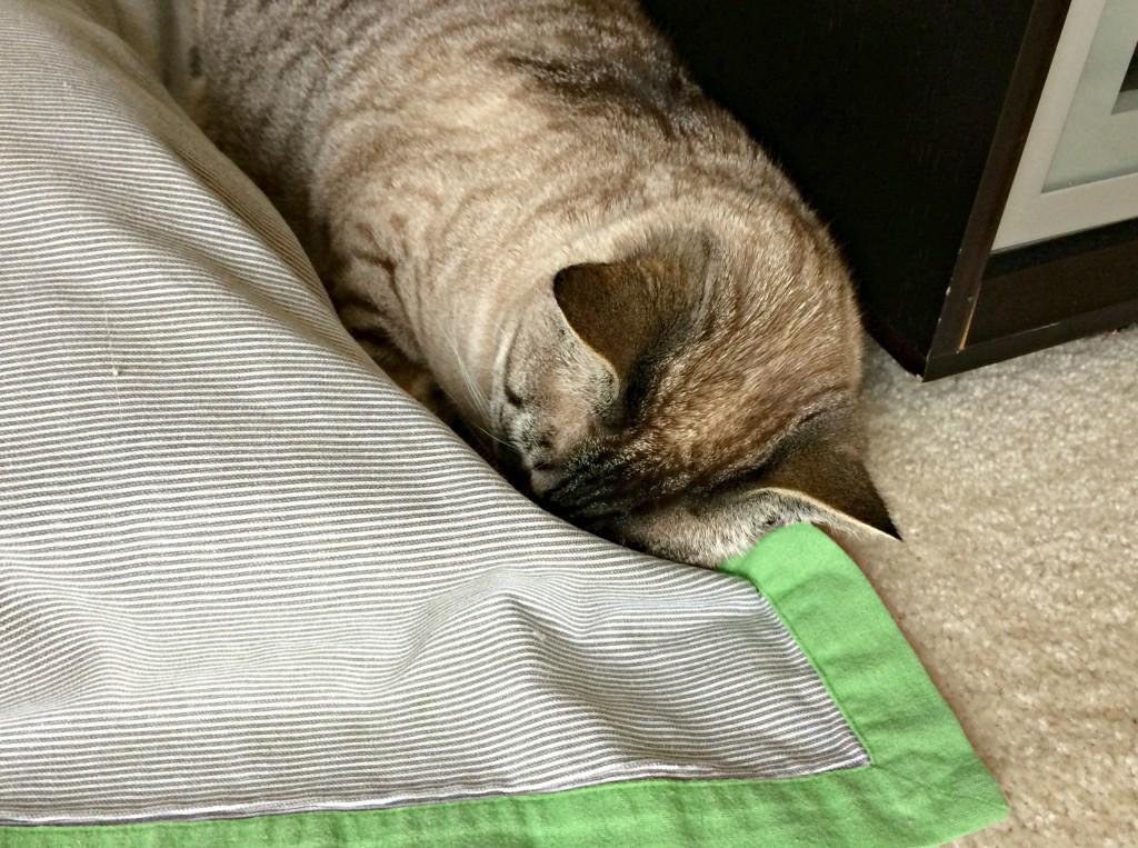 aspen hiding her face
