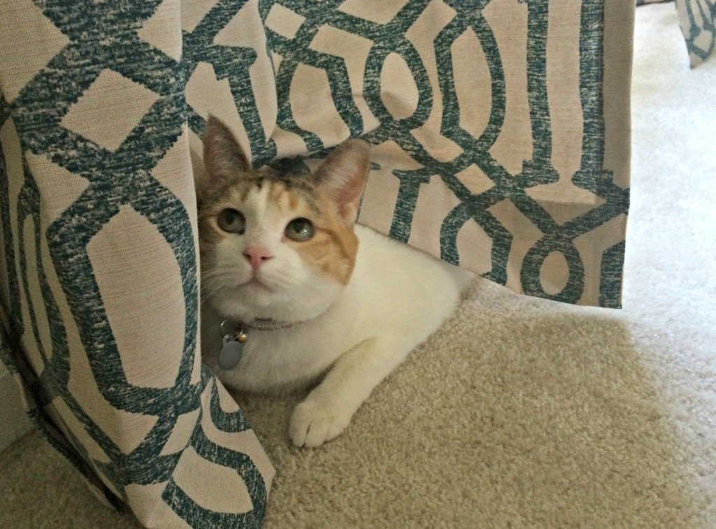 cali hiding in curtains