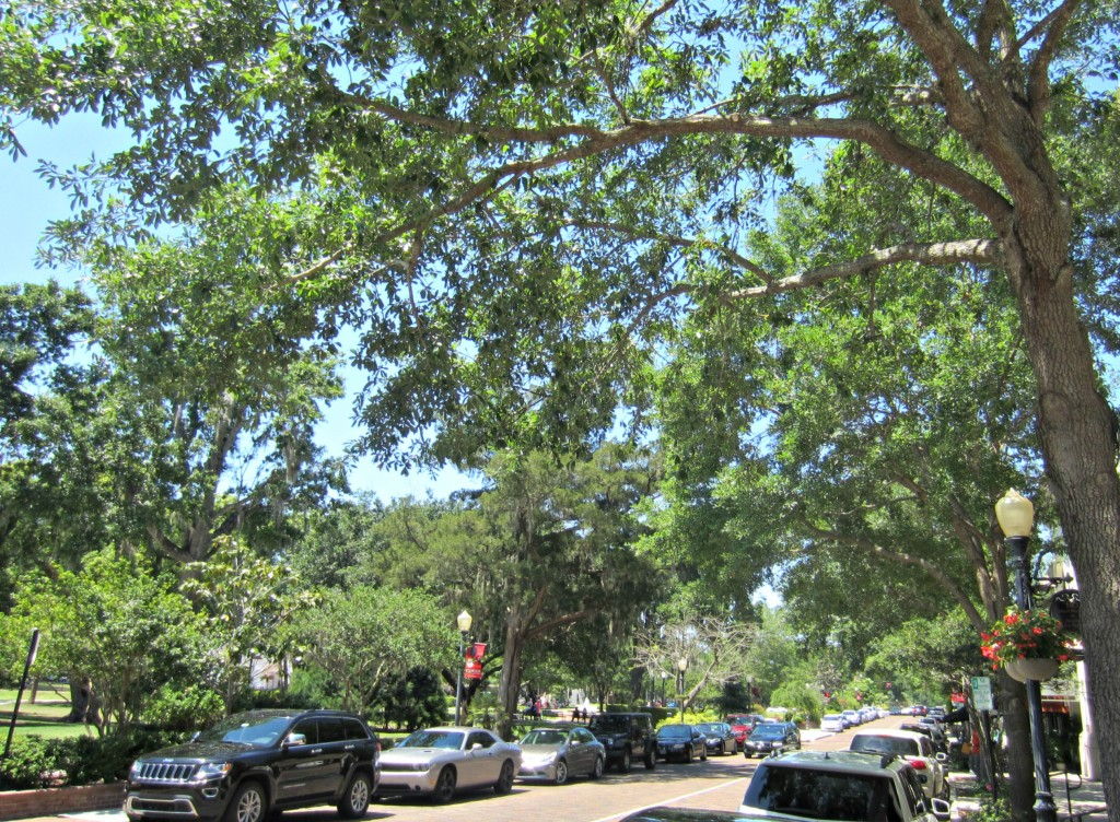florida trees park ave