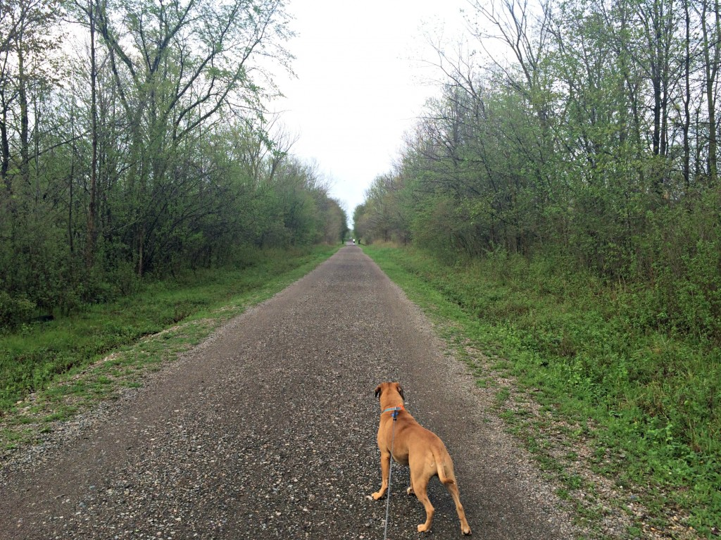 running trails with roadie in spring