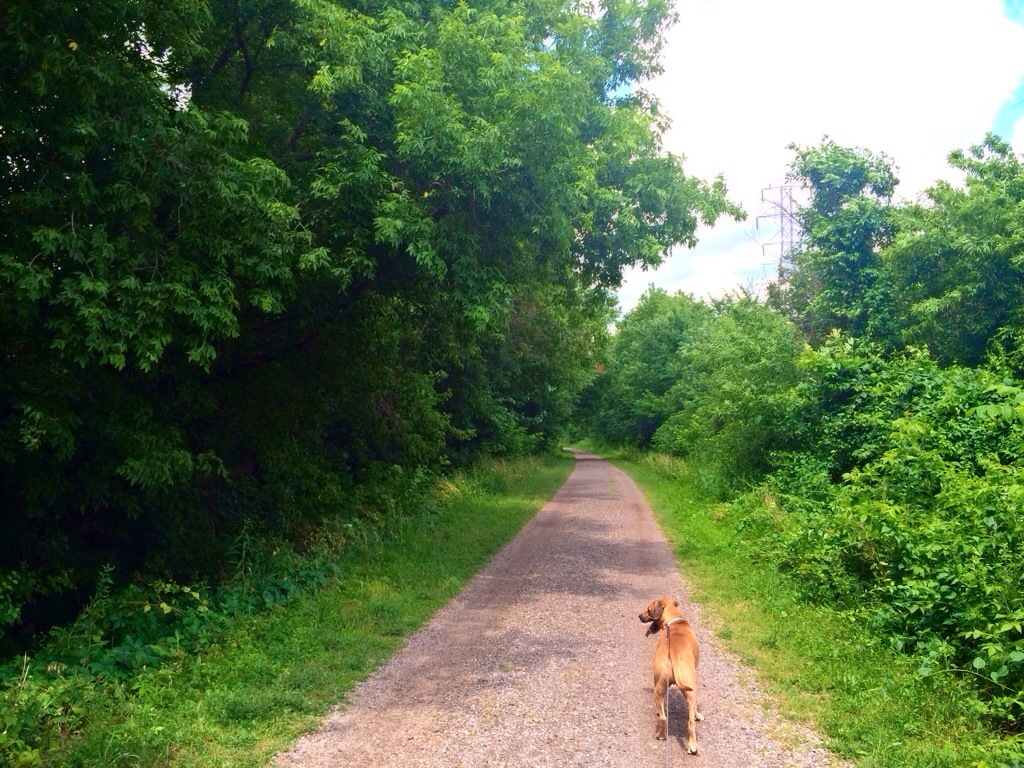 running trails with roadie