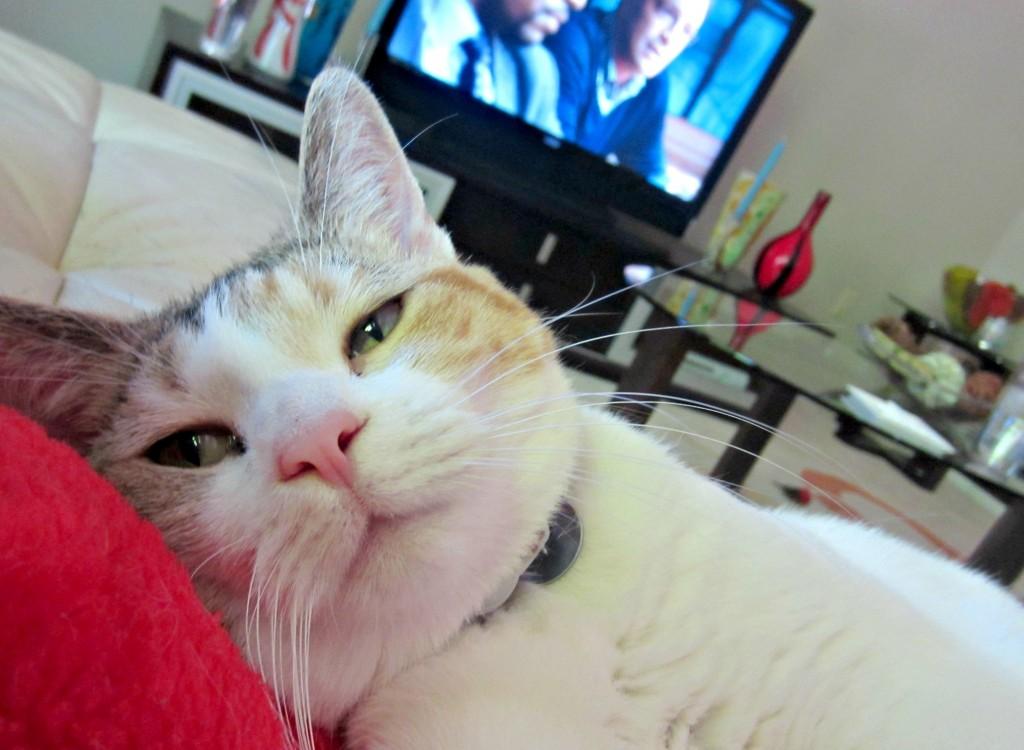 cali snuggles watching scandal