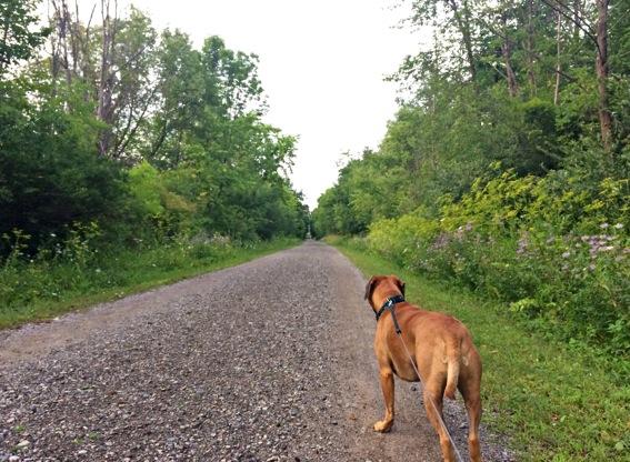 Trail-running-with-Roadie.jpg.jpg