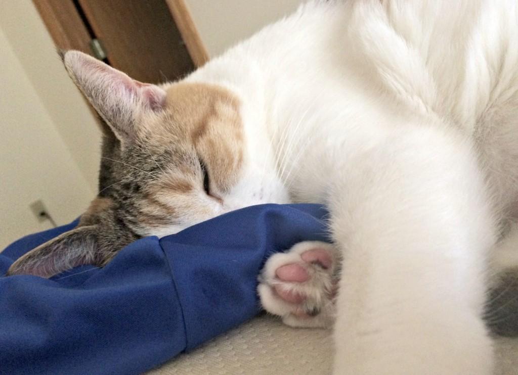 cali sleeping