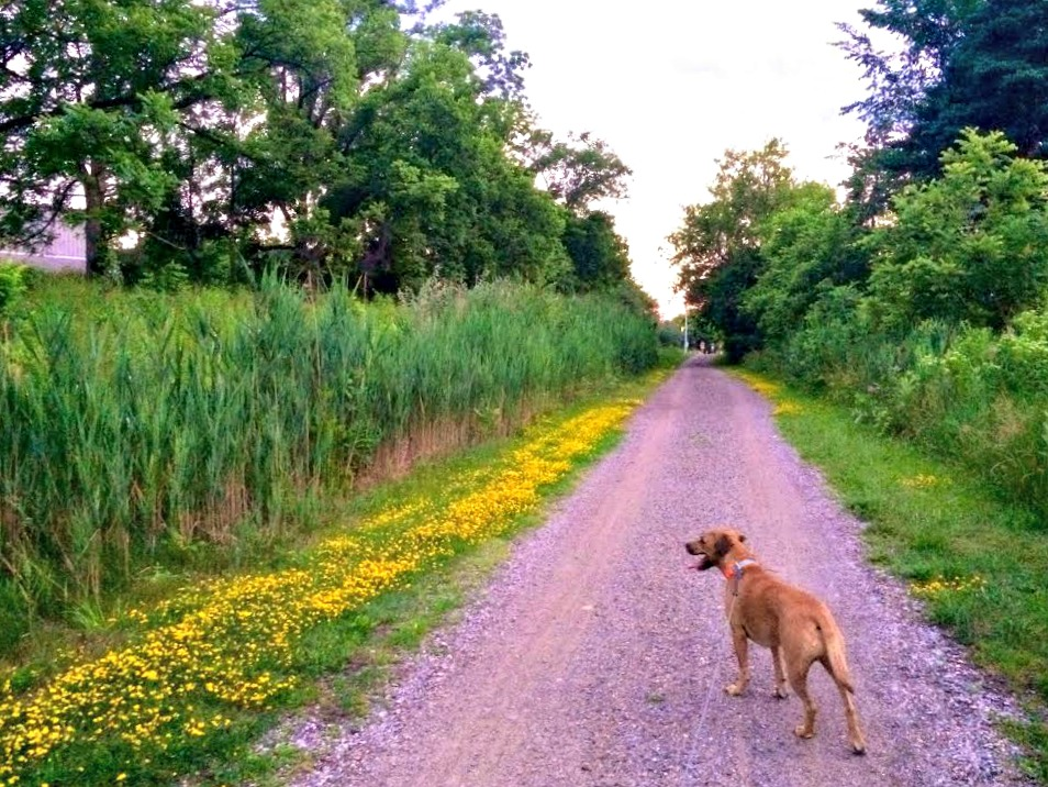 run with roadie on trails