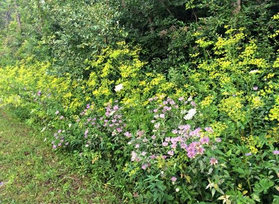 Trail flowers jpg