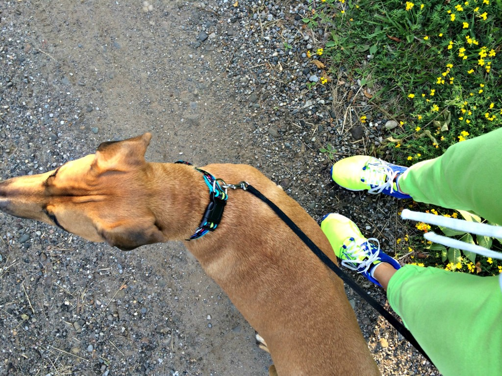 walk with roadie on the trails