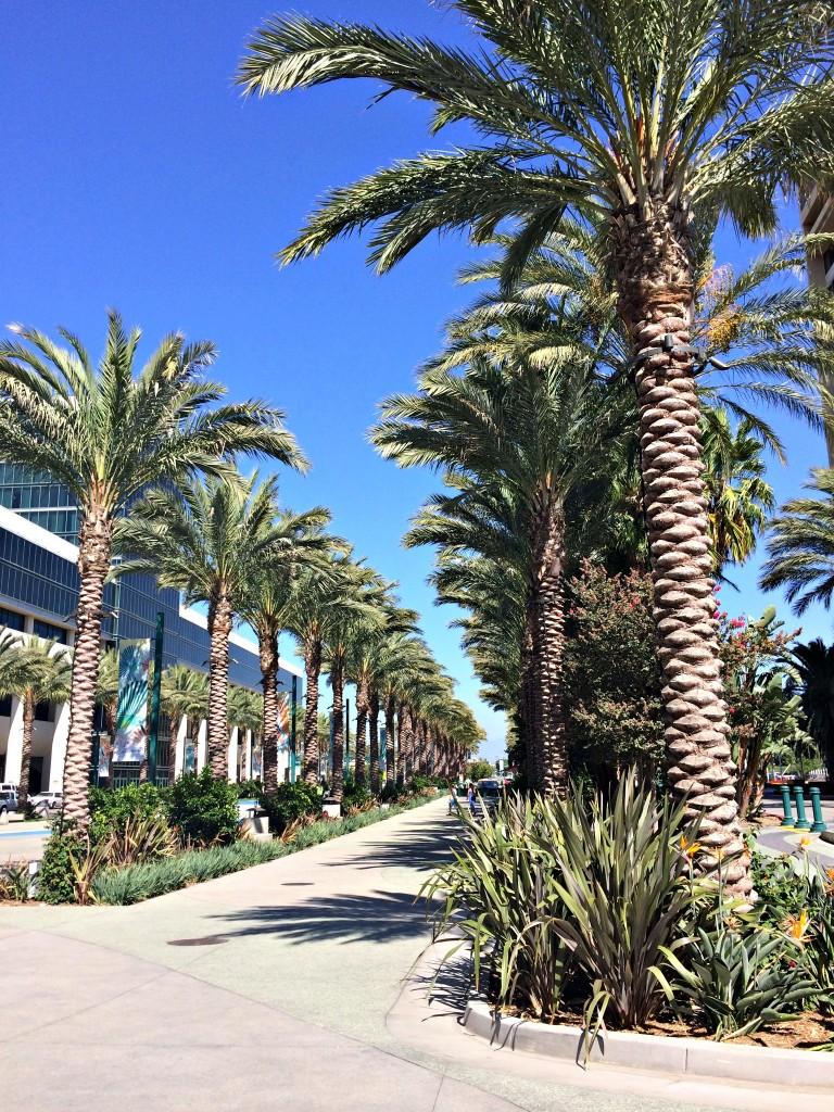 Anaheim Convention Center palm trees