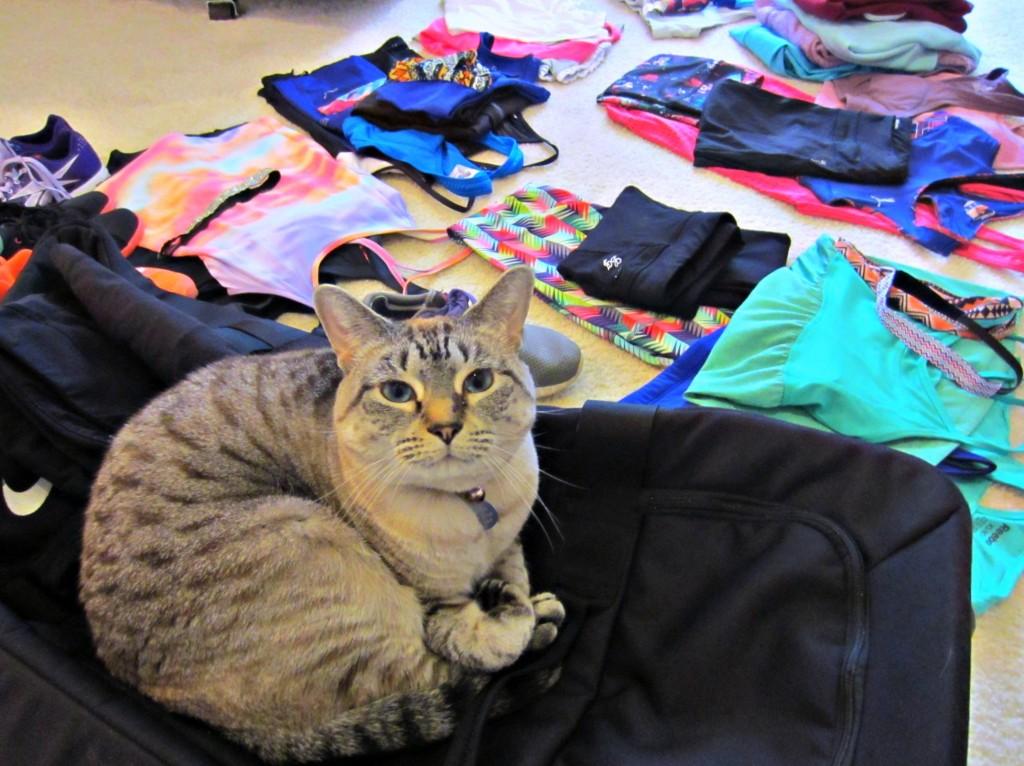 Aspen on my suitcase