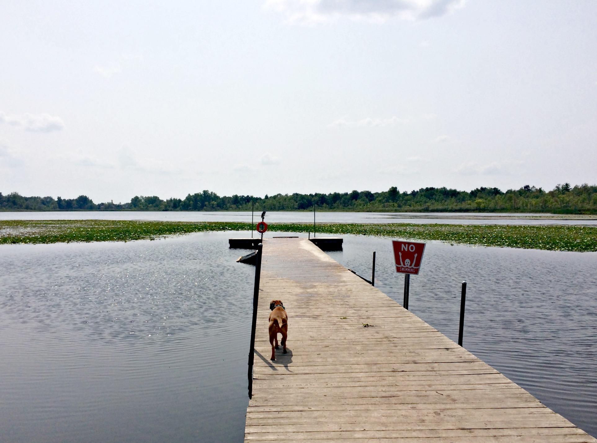 Orion Oaks Dog Dock.jpg