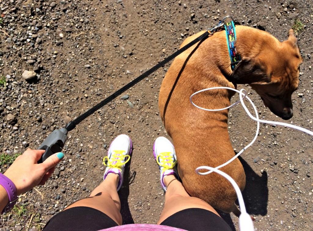 walks with roadie