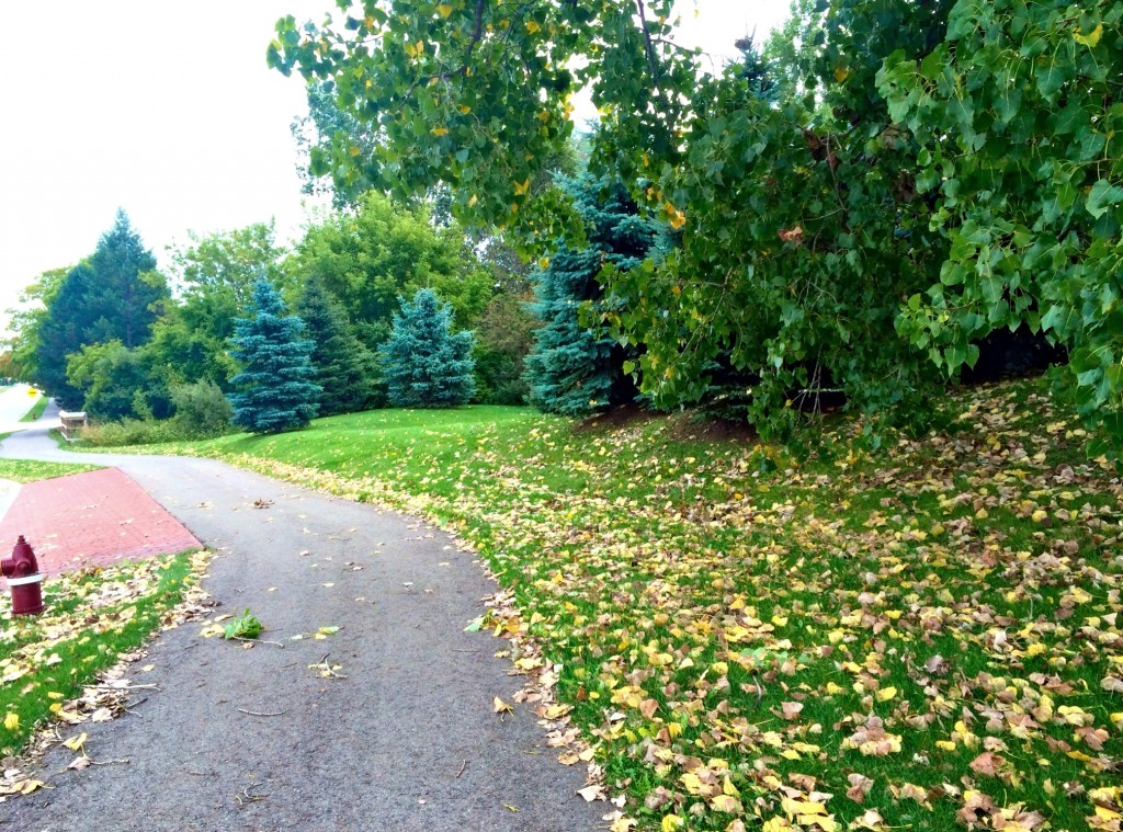 fall is coming neighborhood run