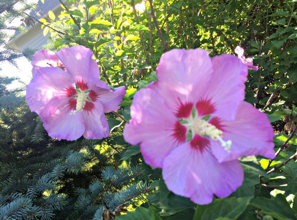 flowers on a walk