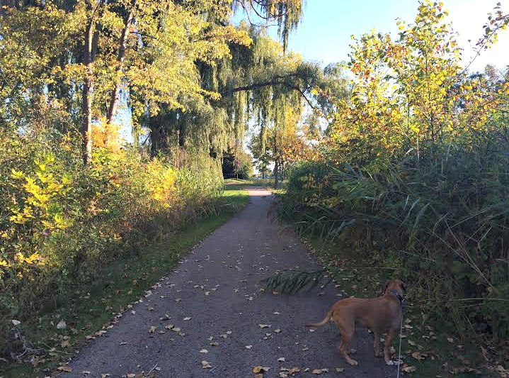 new running path