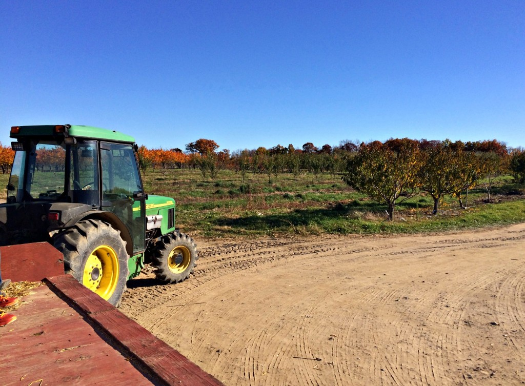 Big Red Apple Picking Tractor