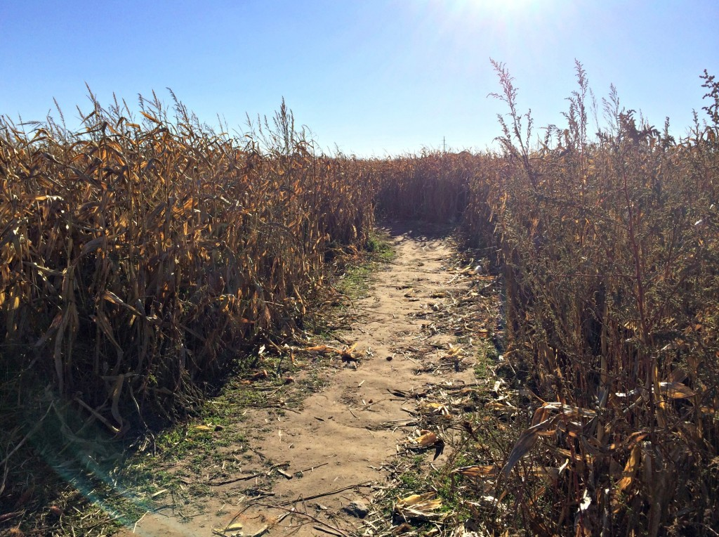 Big Red Corn Maze