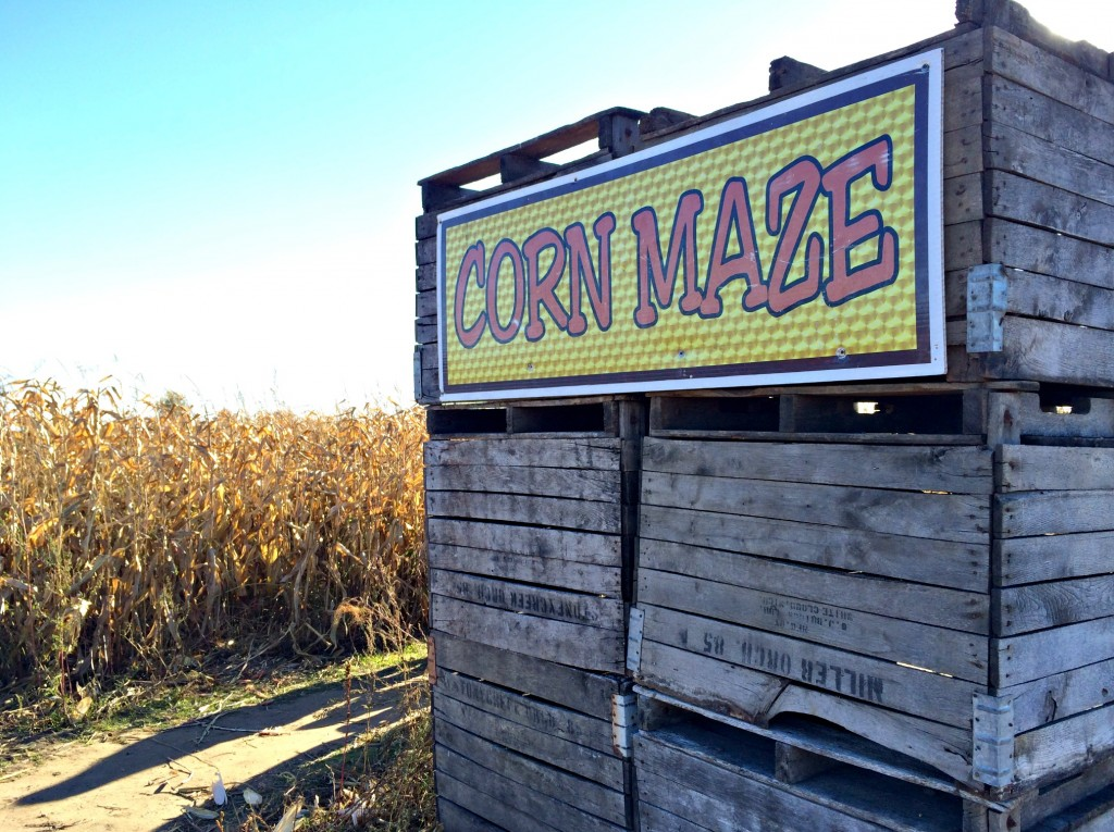 Miller's Big Red Corn Maze