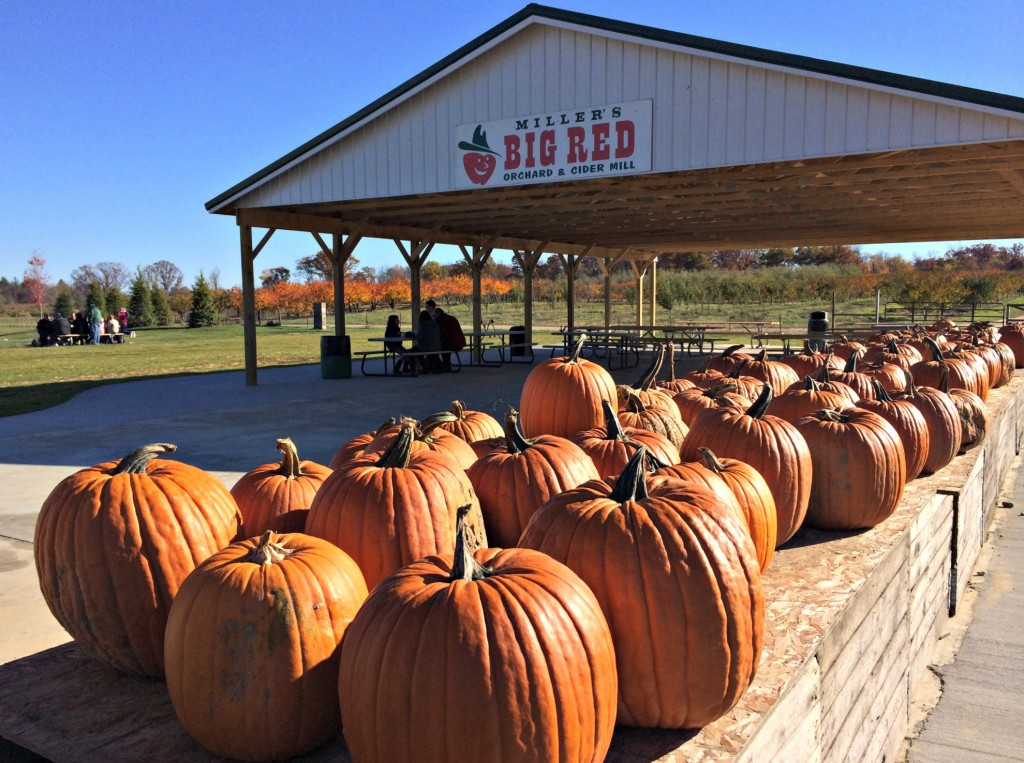 Miller's Big Red Orchard and Cider Mill pumpkins
