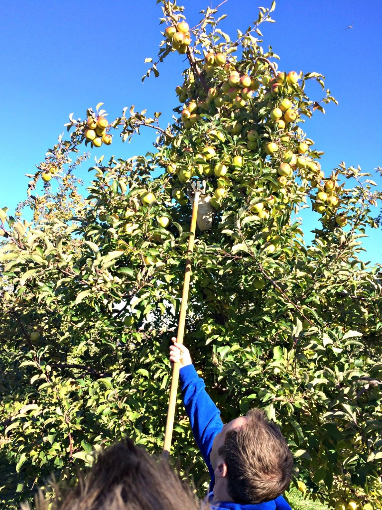 apple picking stick