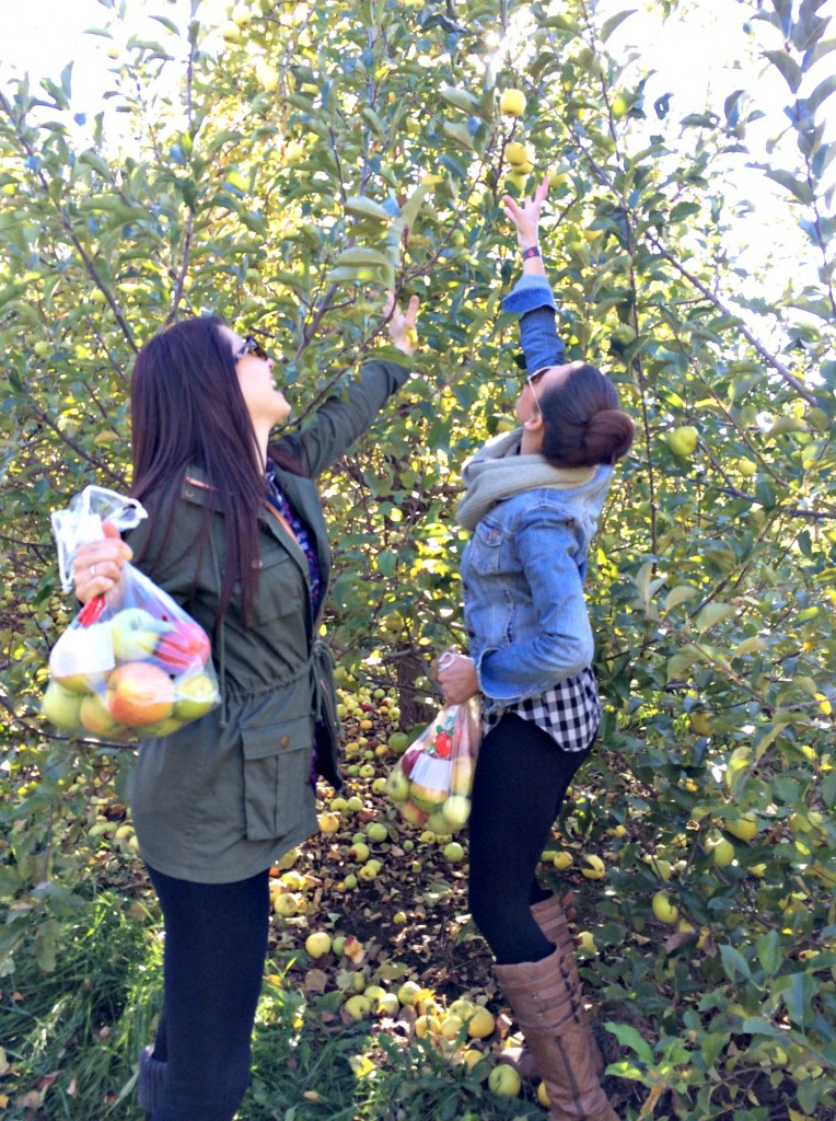 apple picking with alex