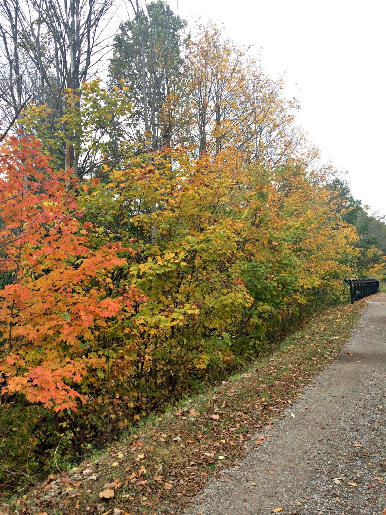 fall foliage on trails