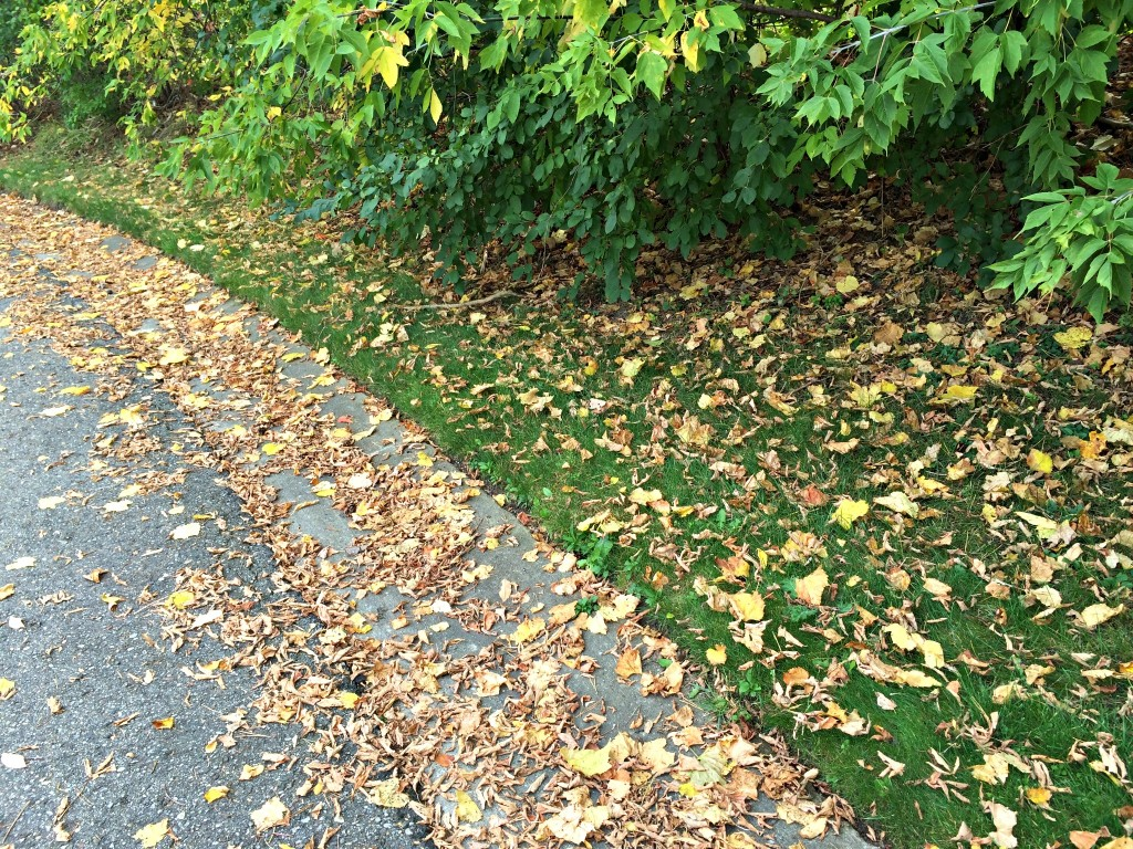 leaves on my run
