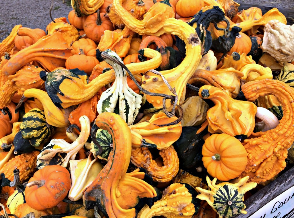 mini gourds at the farmers market