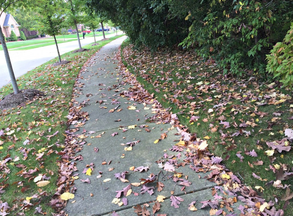 neighborhood leaves on my run