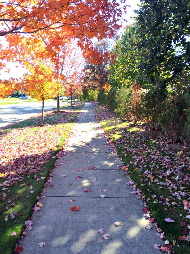 neighborhood training run in the fall