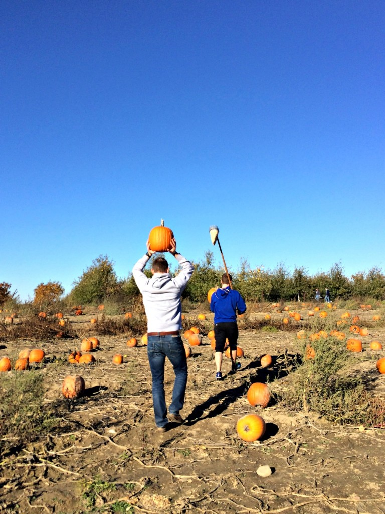 pumpkin patch alex and scott