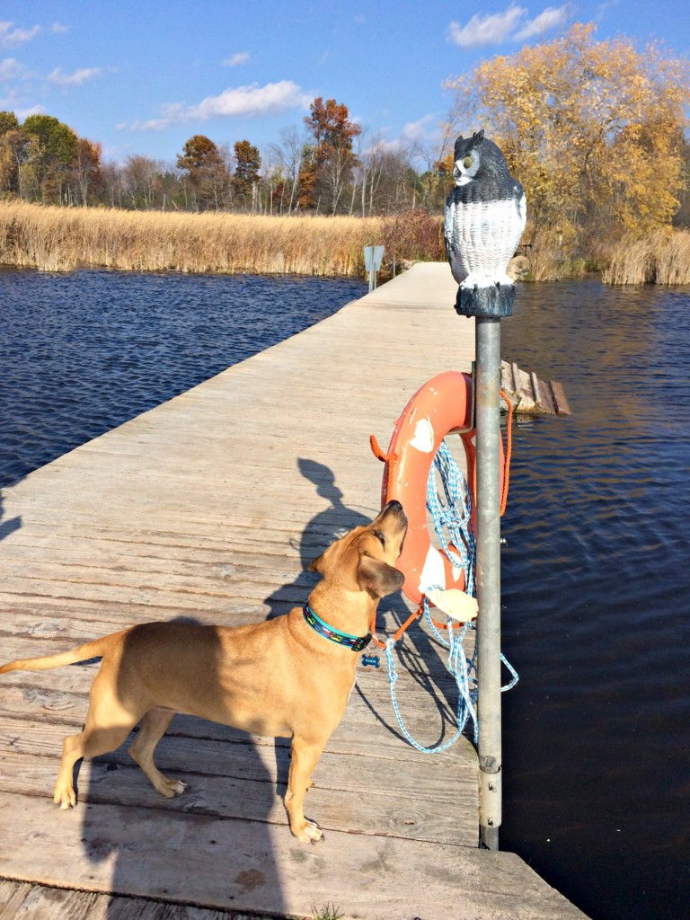 roadie and the owl at the dog dock