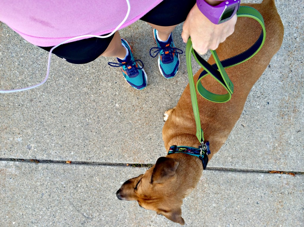 roadie leashed for a run