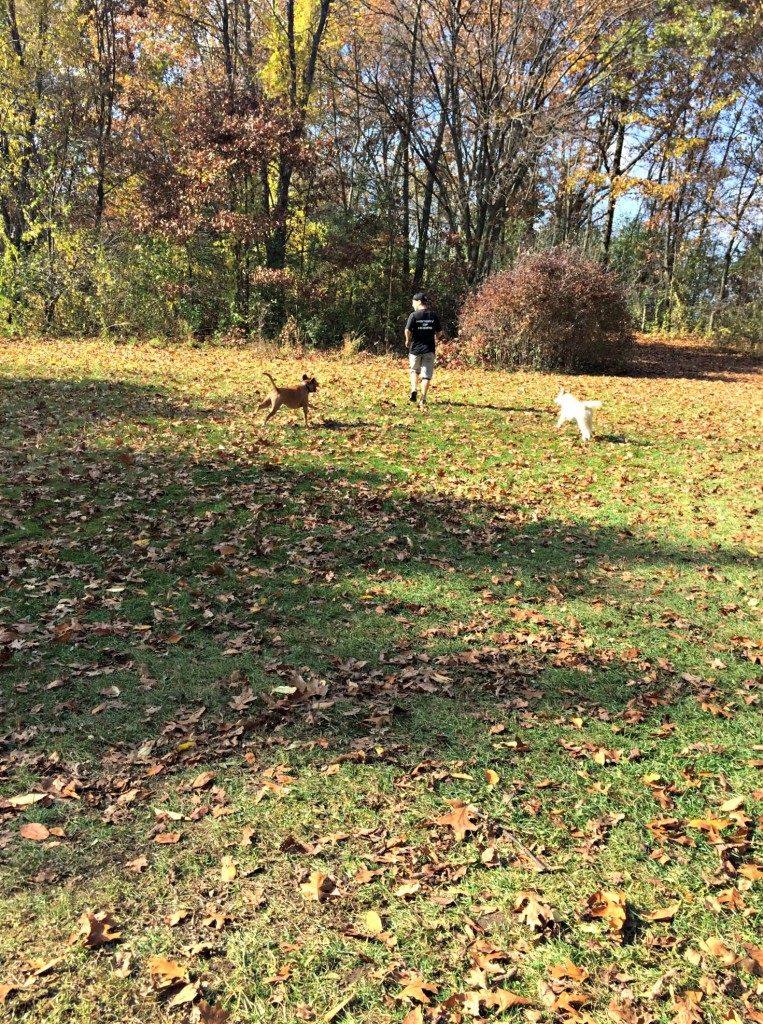 scott at the dog park with roadie and odin