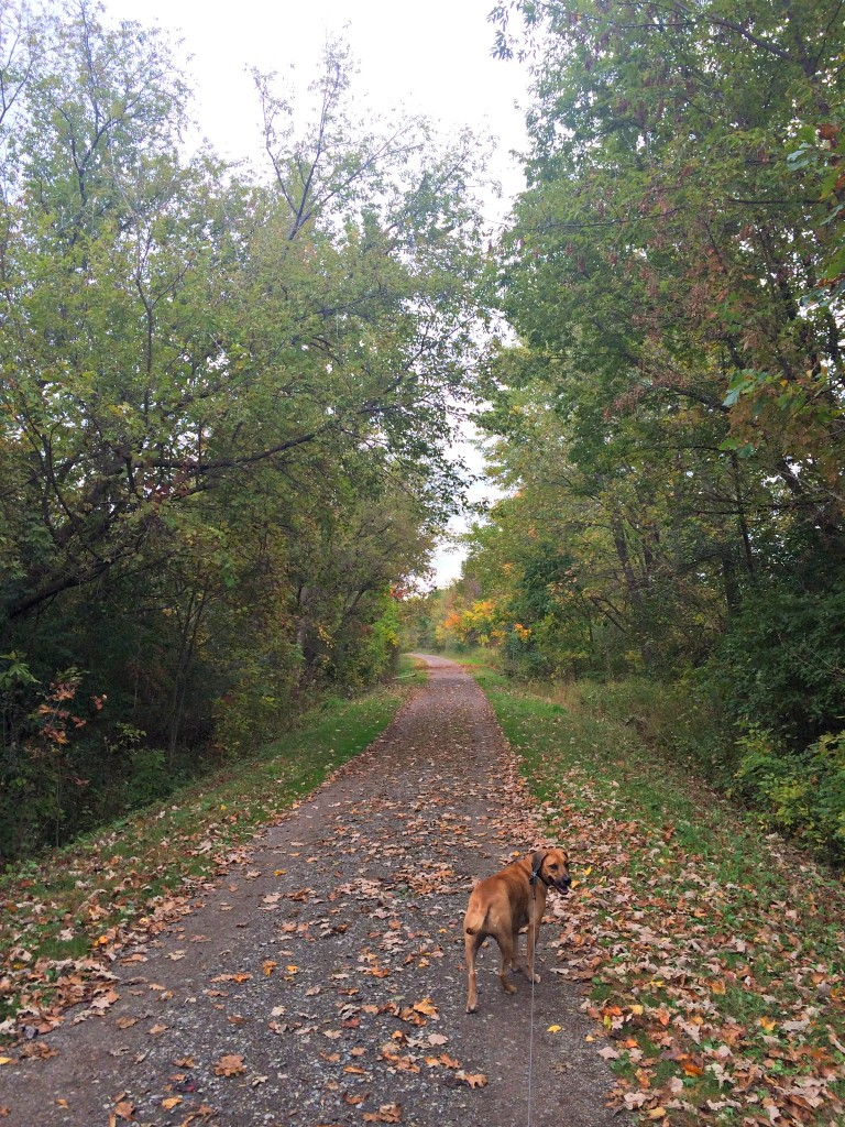 trail run with roadie in fall