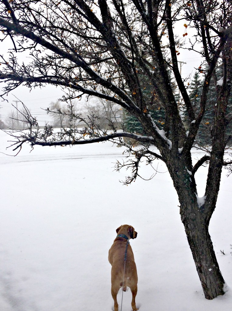 Roadie looking out at the snow
