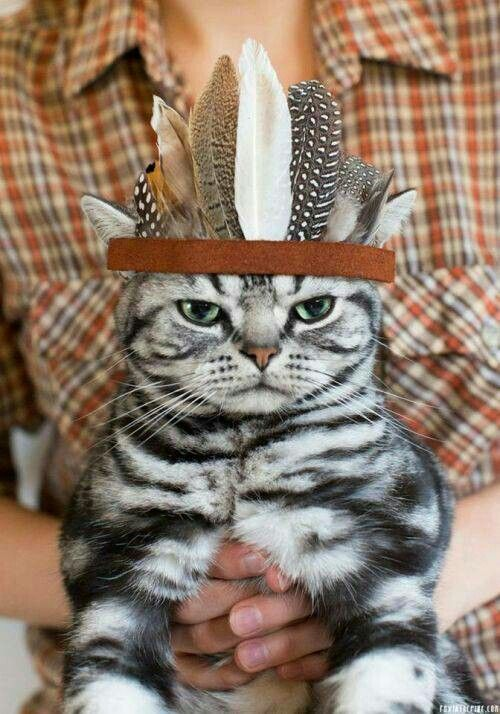 thanksgiving cat funny