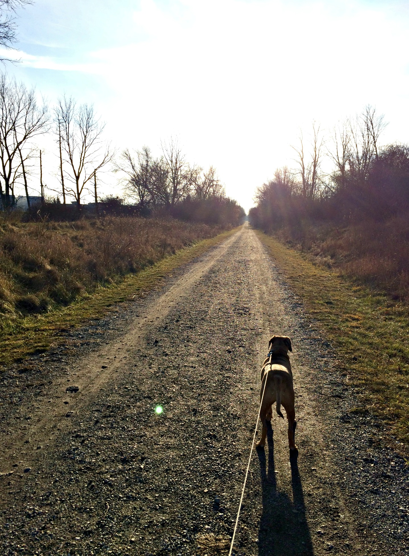 winter trails with roadie