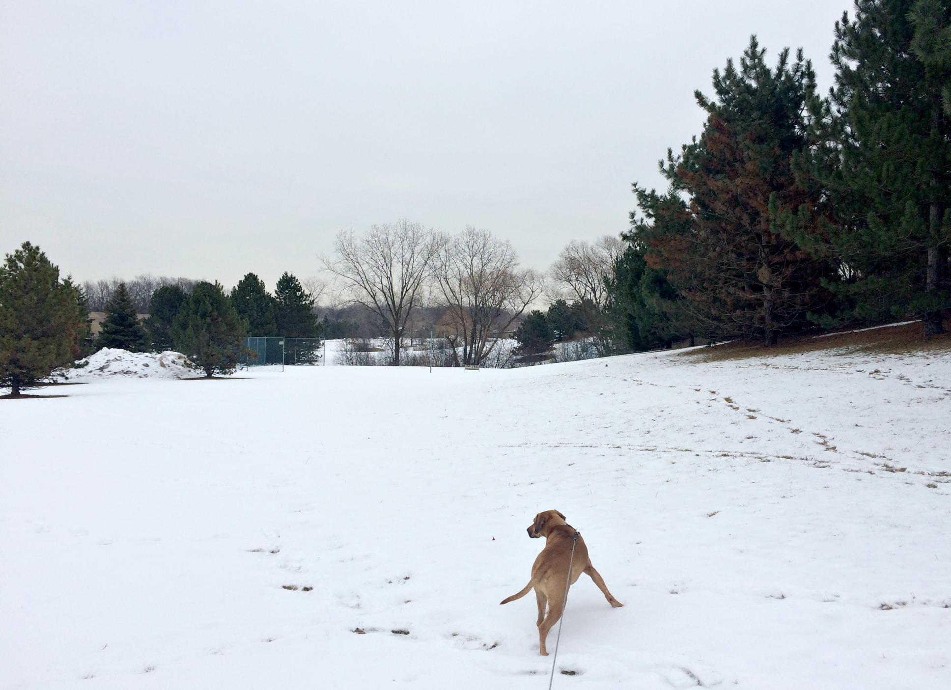 Roadie walking in the snow