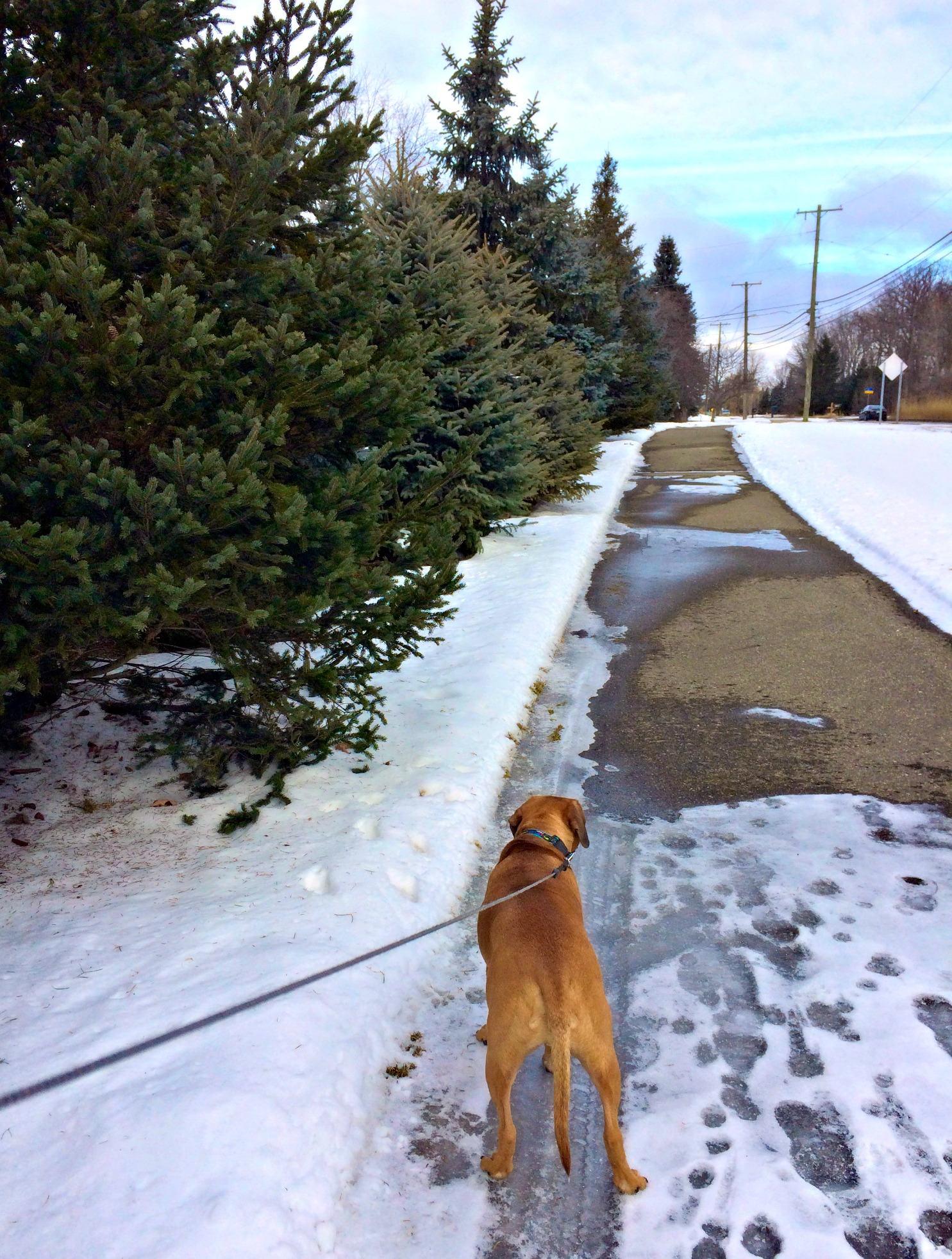 running with roadie in the snow and ice