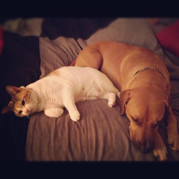 Roadie and Cali snuggling