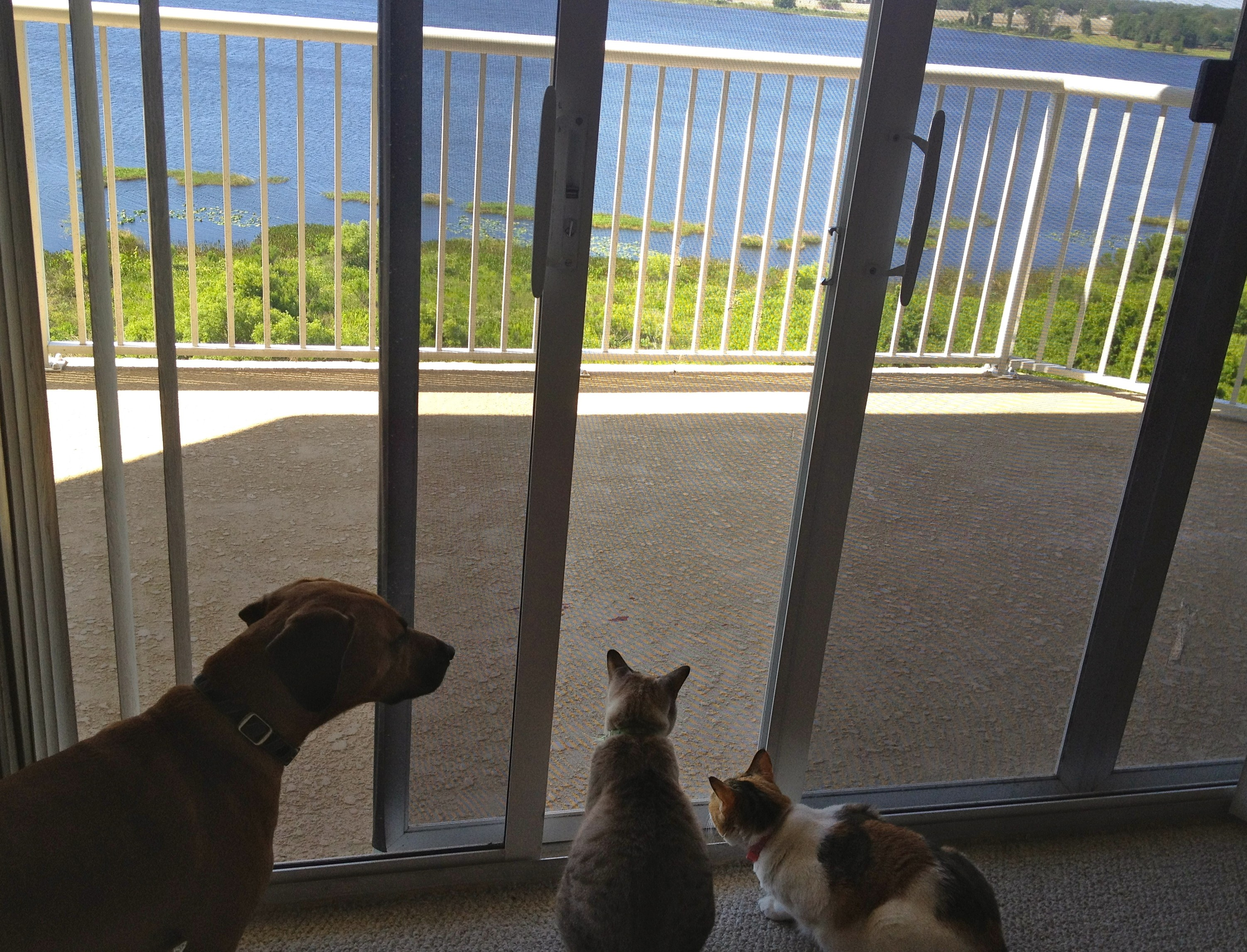 Pets looking out window
