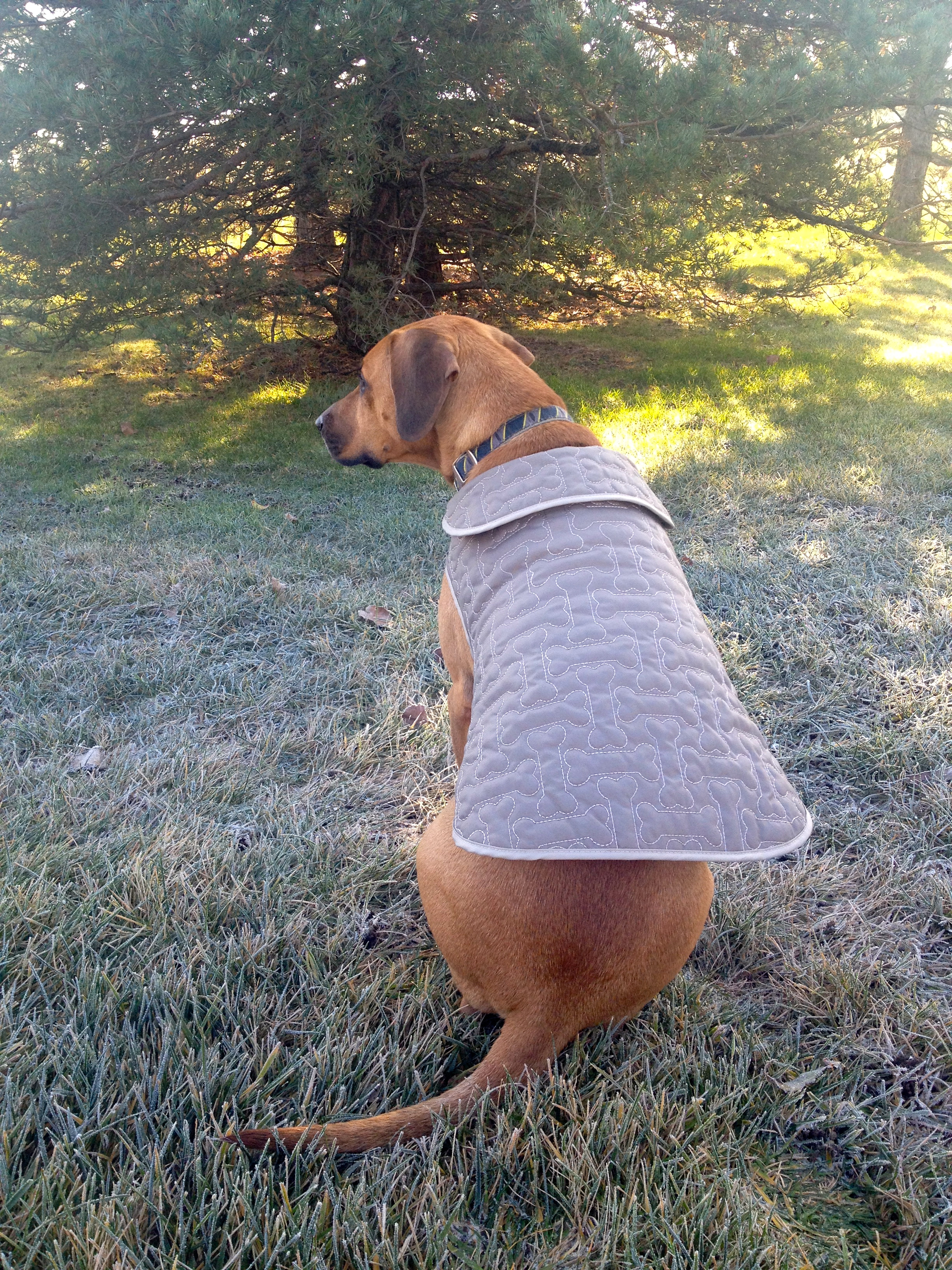 fleece sweater for dogs