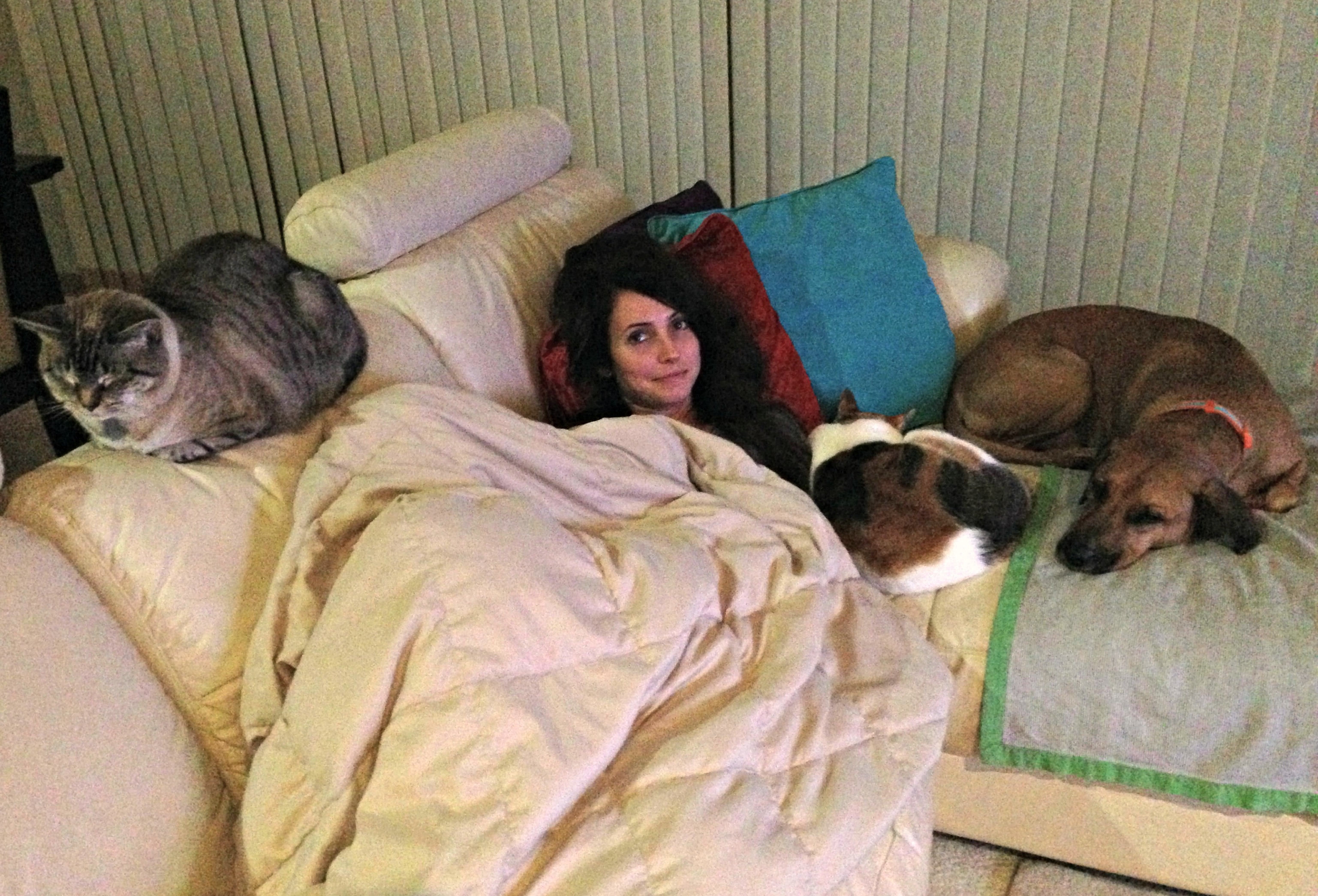 relaxing on couch with pets