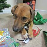 roadie opening presents