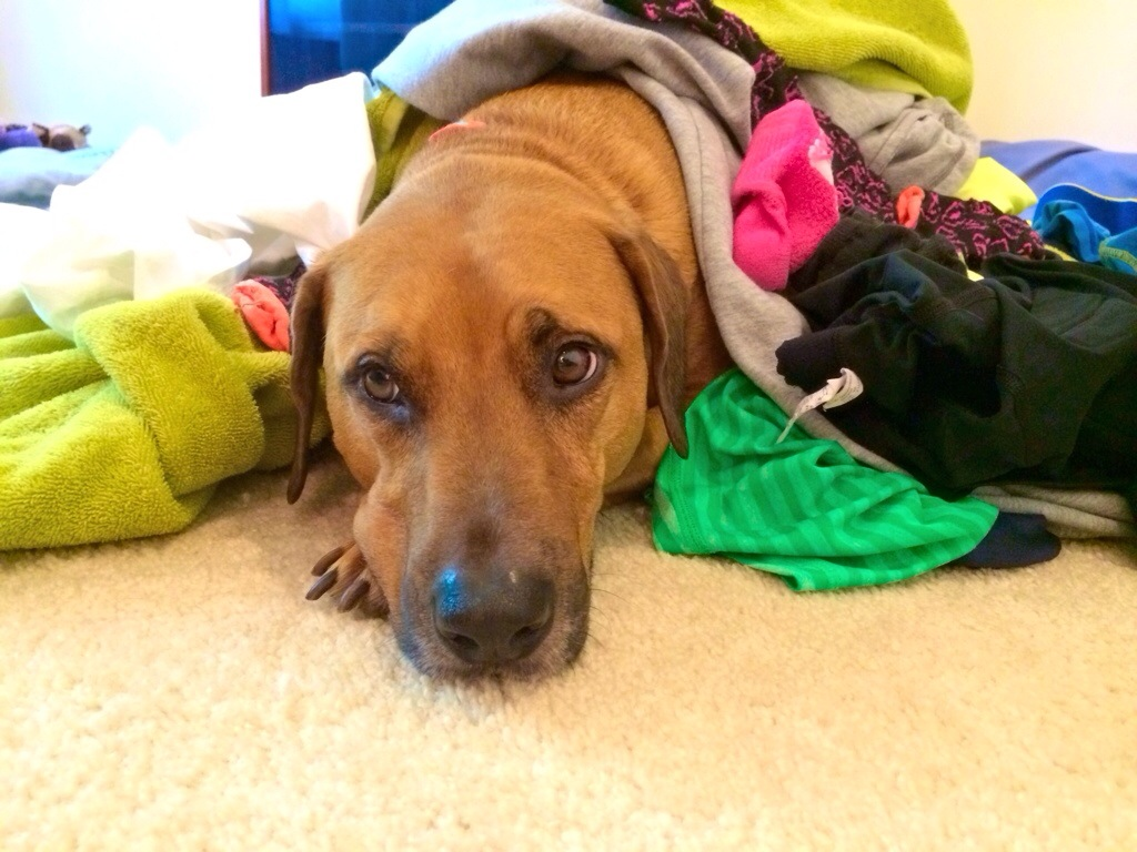 roadie helps fold laundry