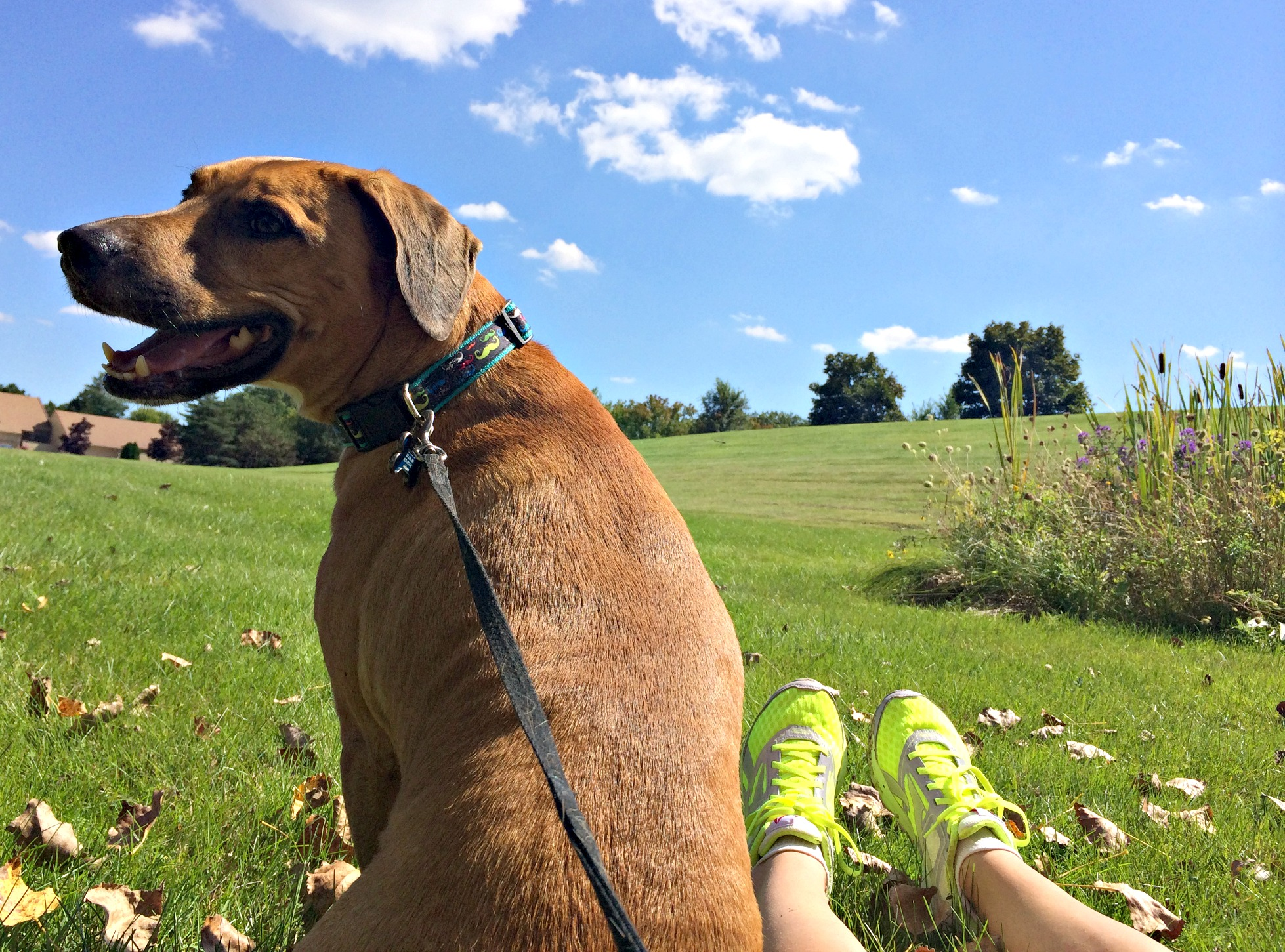 fall day with roadie