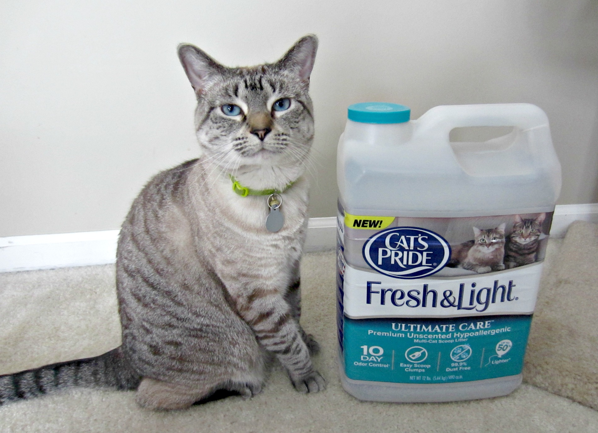 Aspen with cat's pride fresh & light ultimate care cat litter