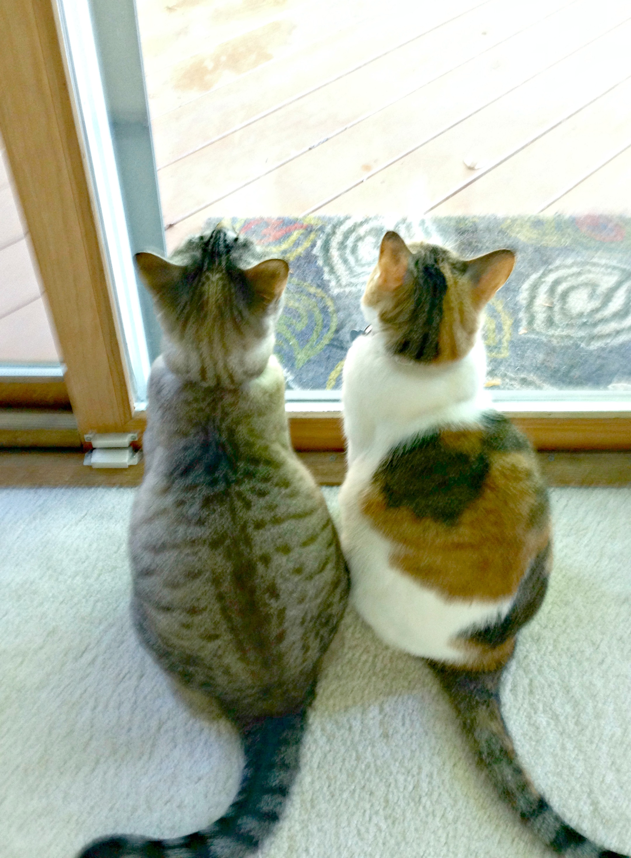 cats-by-window