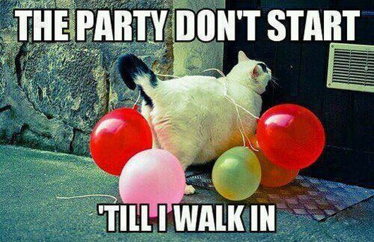funny cat party
